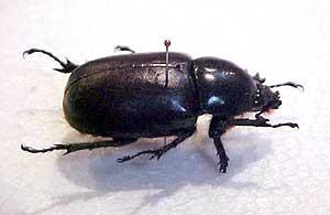 beetle-7-2.jpg
